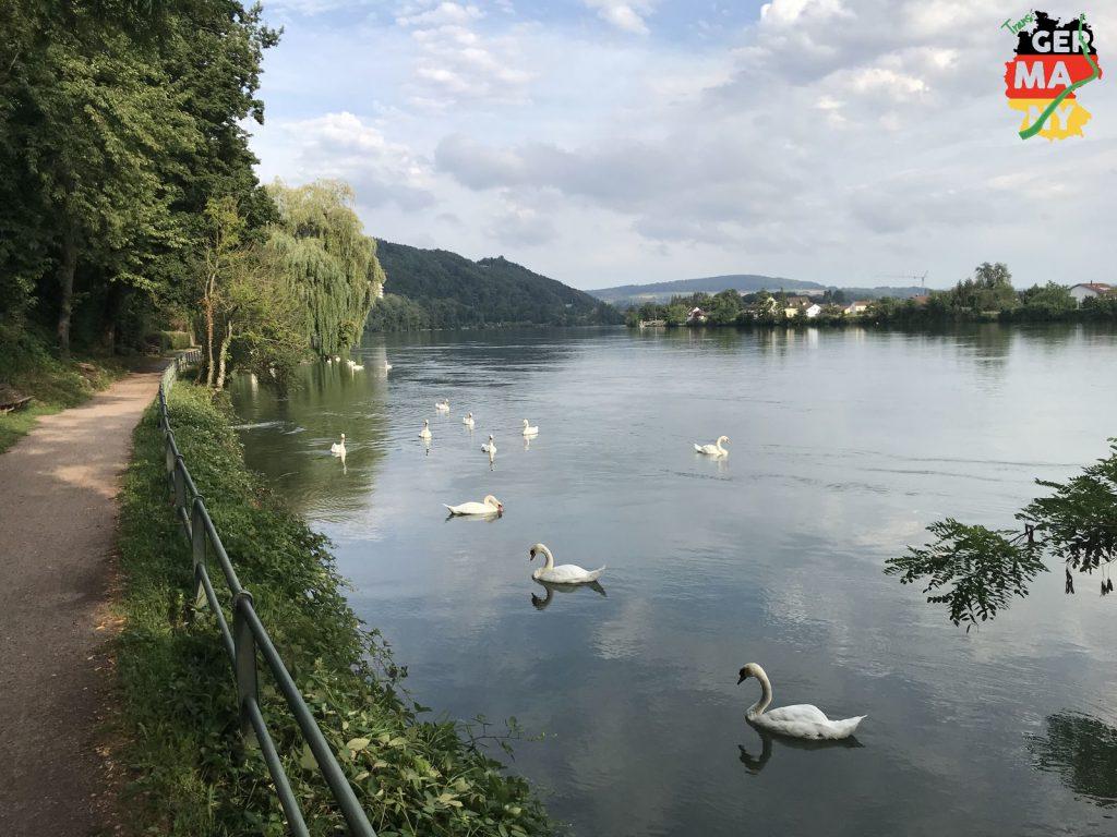 Bis Waldshut bleibe ich am Rhein.