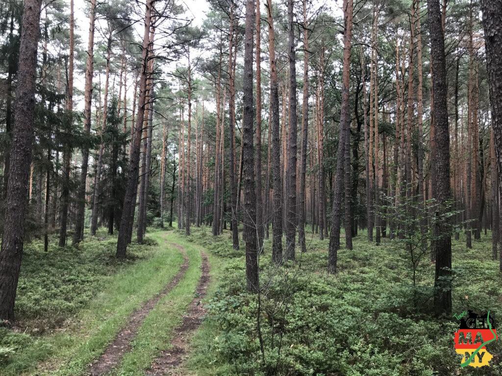 Unendliche Kiefernwälder auf dem Weg nach Erlangen.