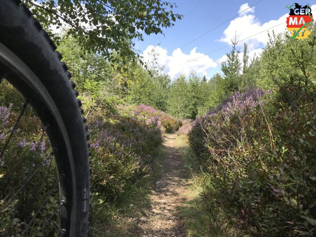 Noch mehr Trails, langsam geht es Richtung Tschechien.